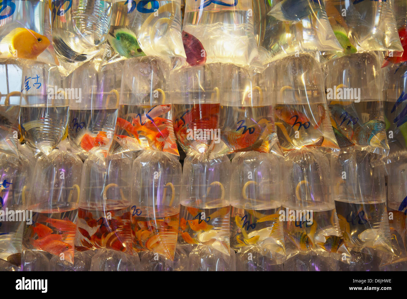 Tropical fish at pet shop mongkok hong kong china asia for Fish and pet store