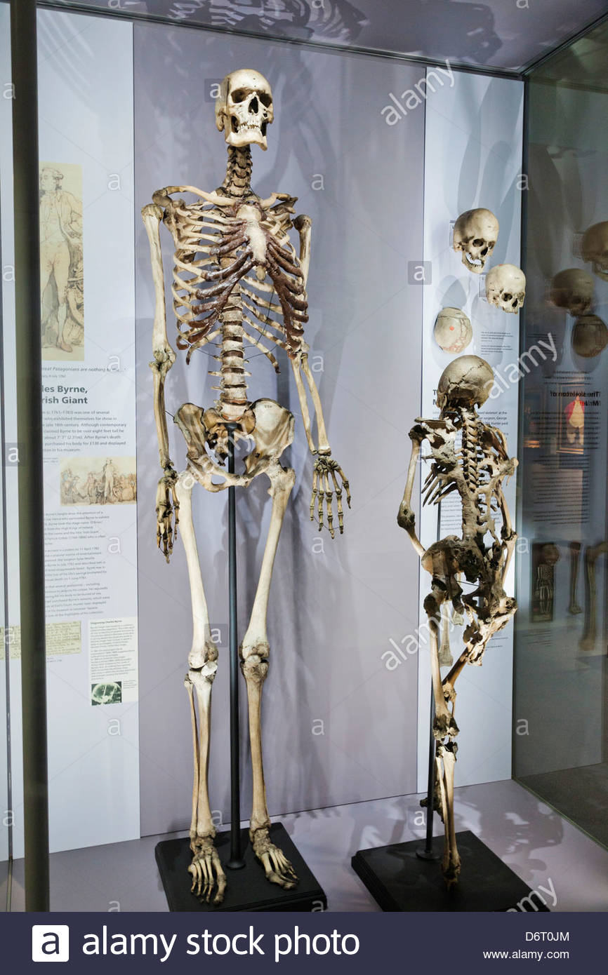 Anatomy museum london