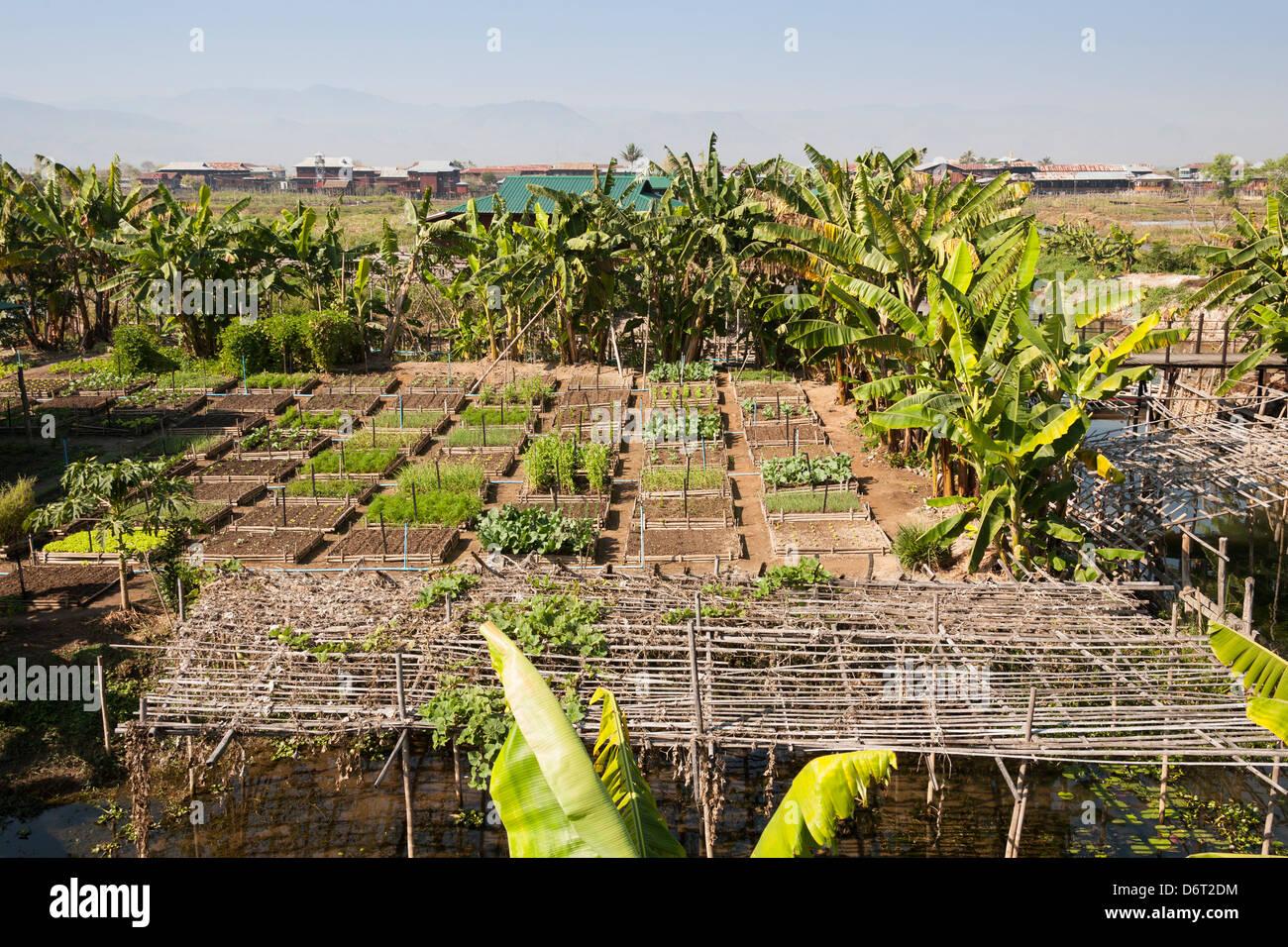 Organic vegetable gardens - Organic Vegetable Garden Inthar Heritage House Inpawkhon Village Inle Lake Shan State Myanmar Burma