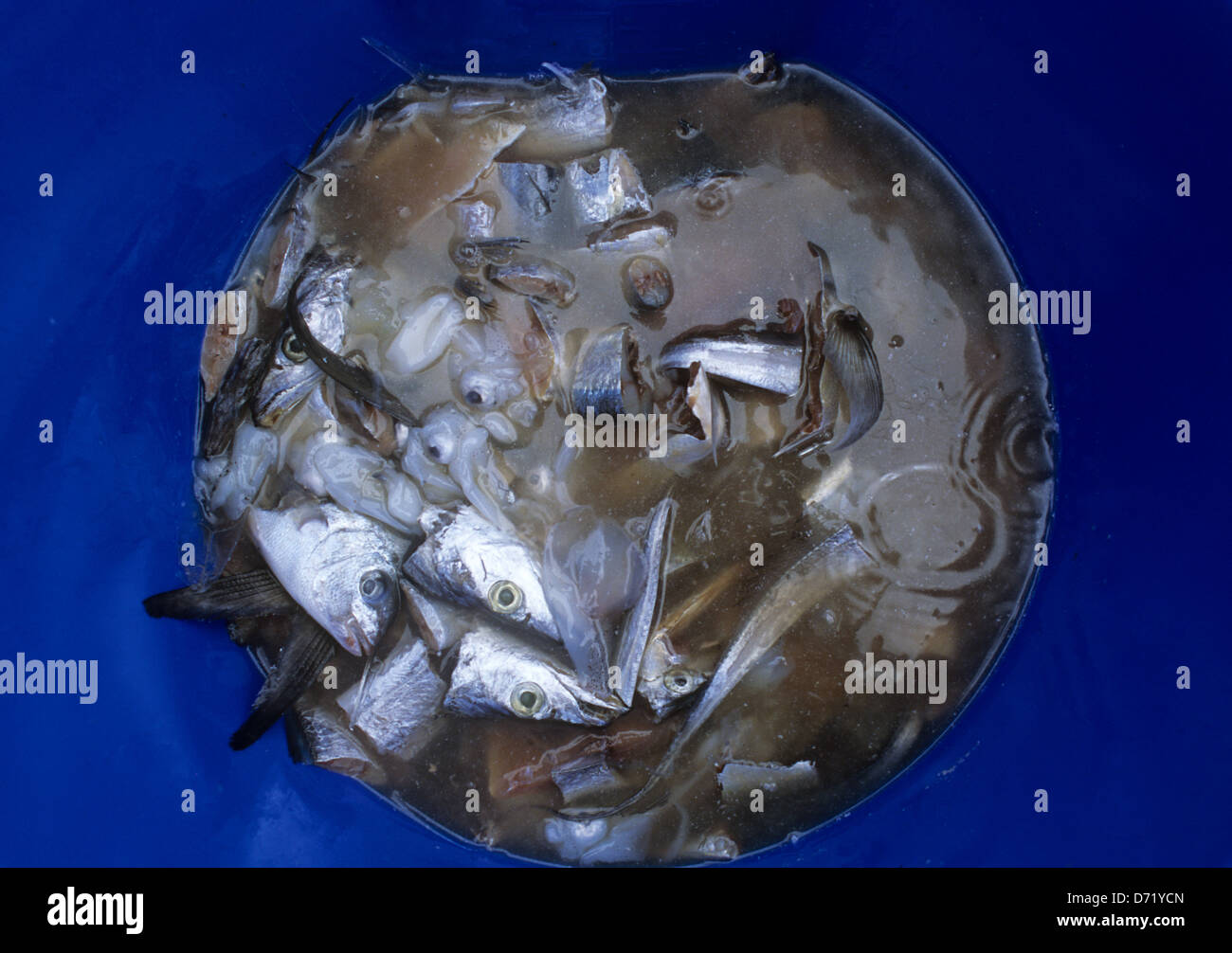 Chum used for offshore and deep sea fishing near port for Port aransas deep sea fishing