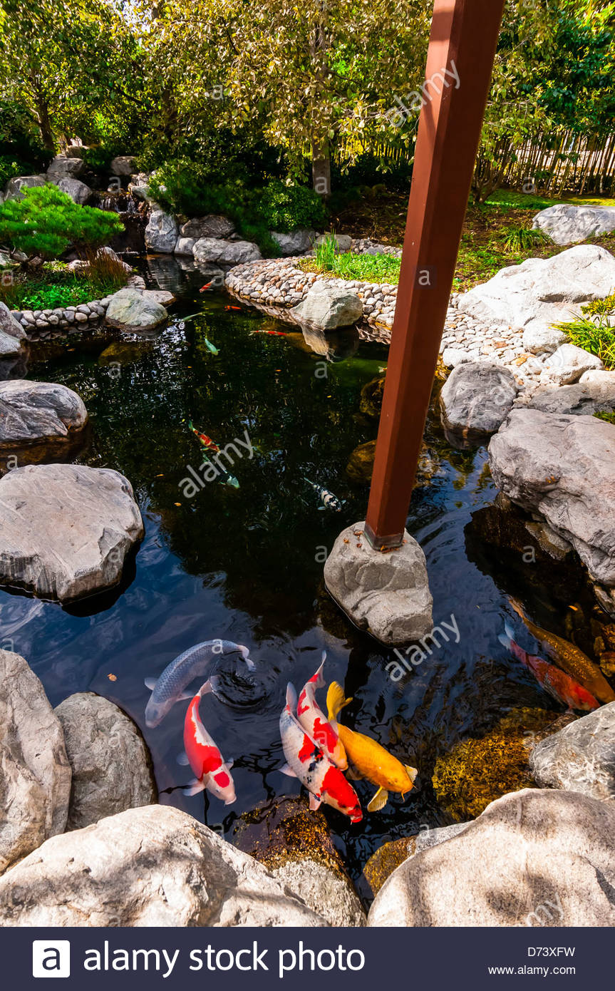 Koi pond japanese friendship garden balboa park san for Japanese koi water garden