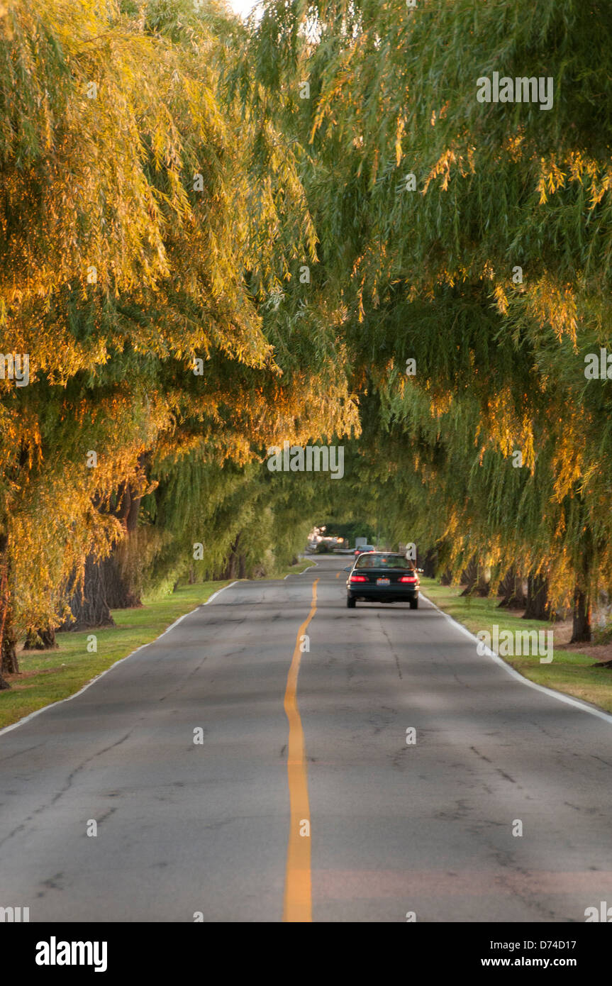 Car on a lonely road with a canopy of trees sandusky ohio usa