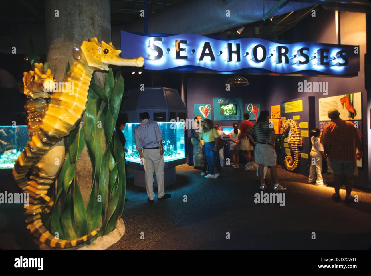 Elk283 2114 Louisiana New Orleans Audubon Aquarium Of