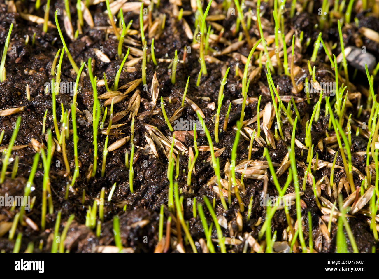Soil germinating seeds pictures to pin on pinterest for What does soil come from