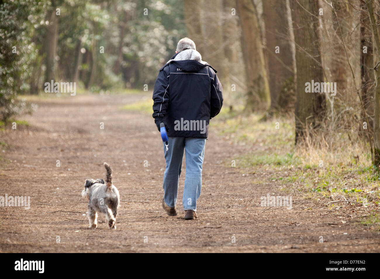 Man Walking Dog : One man walking his dog in woods on a path from the back