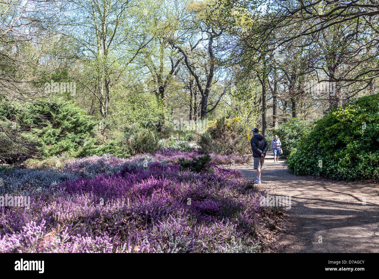Isabella plantation richmond park greater london uk 1st may 2013 spring arrives in london after an long cold winter people enjoy the dappled
