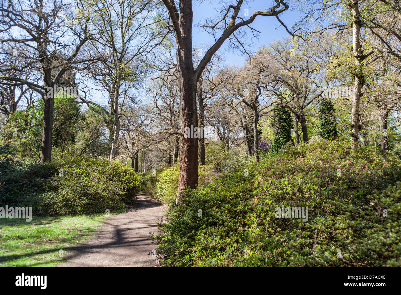 isabella plantation richmond park greater london uk 1st may 2013 spring