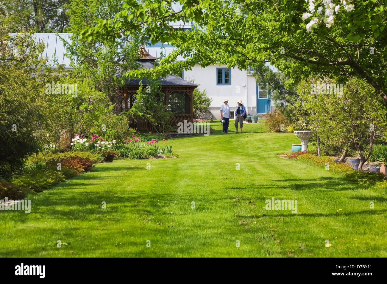 Owner And Friend On Lawn With Apple Tree In Blossom In Residential Back  Yard Garden;Quebec Canada