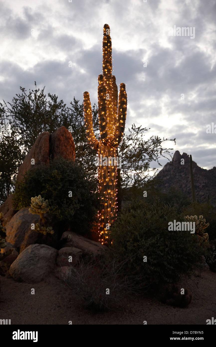 Saguaro Cactus decorated with holiday Christmas lights Stock Photo ...