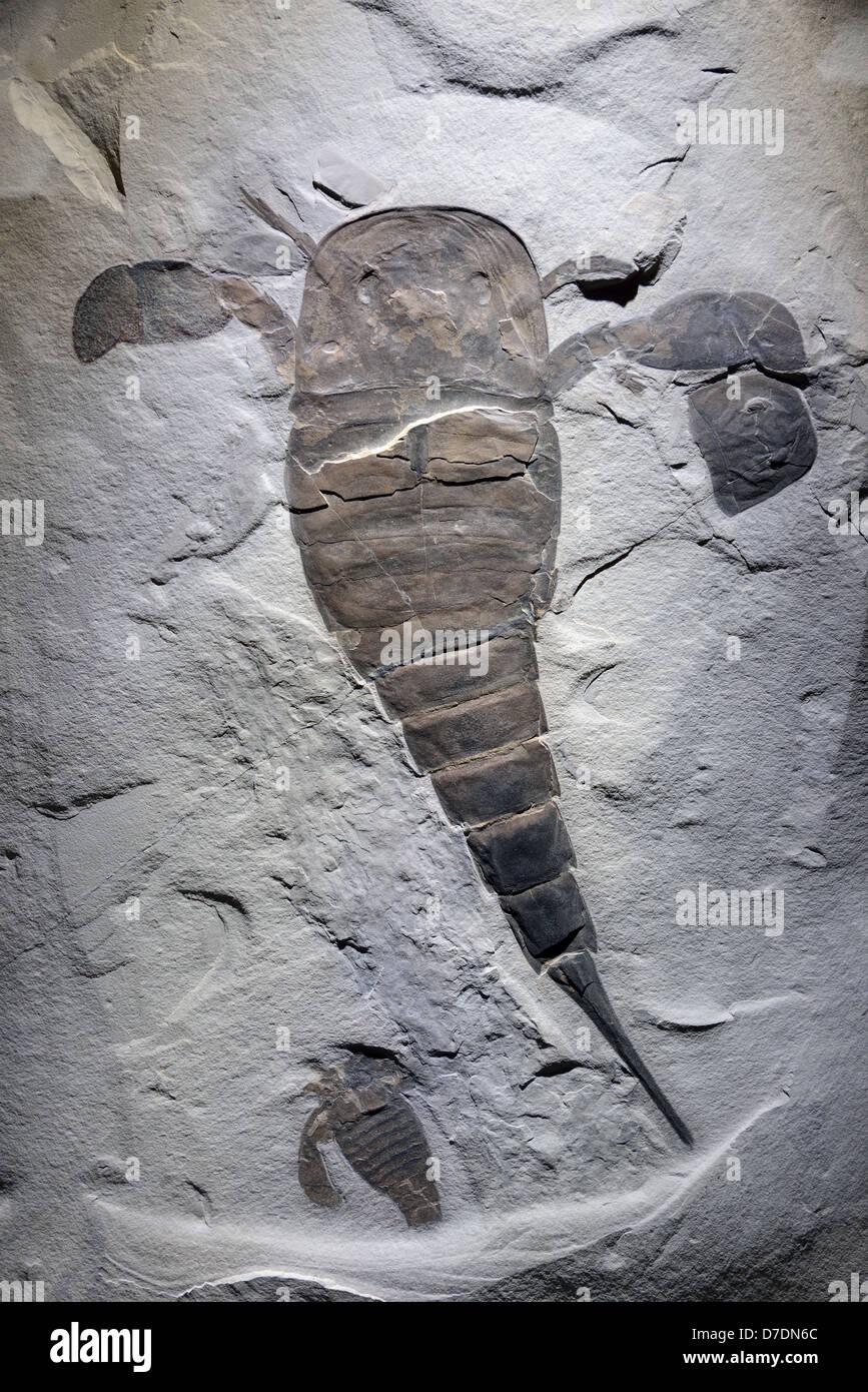 Scorpion  Wikipedia