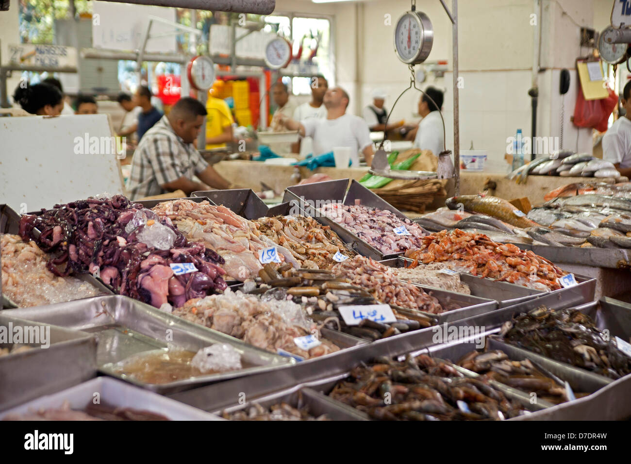 Freshly caught fish and seafood at the fish market in for American fish and seafood