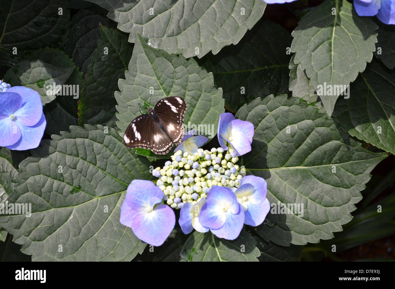 Dark Blue And White Flowers: Black And White Butterfly With Blue And White Flowers