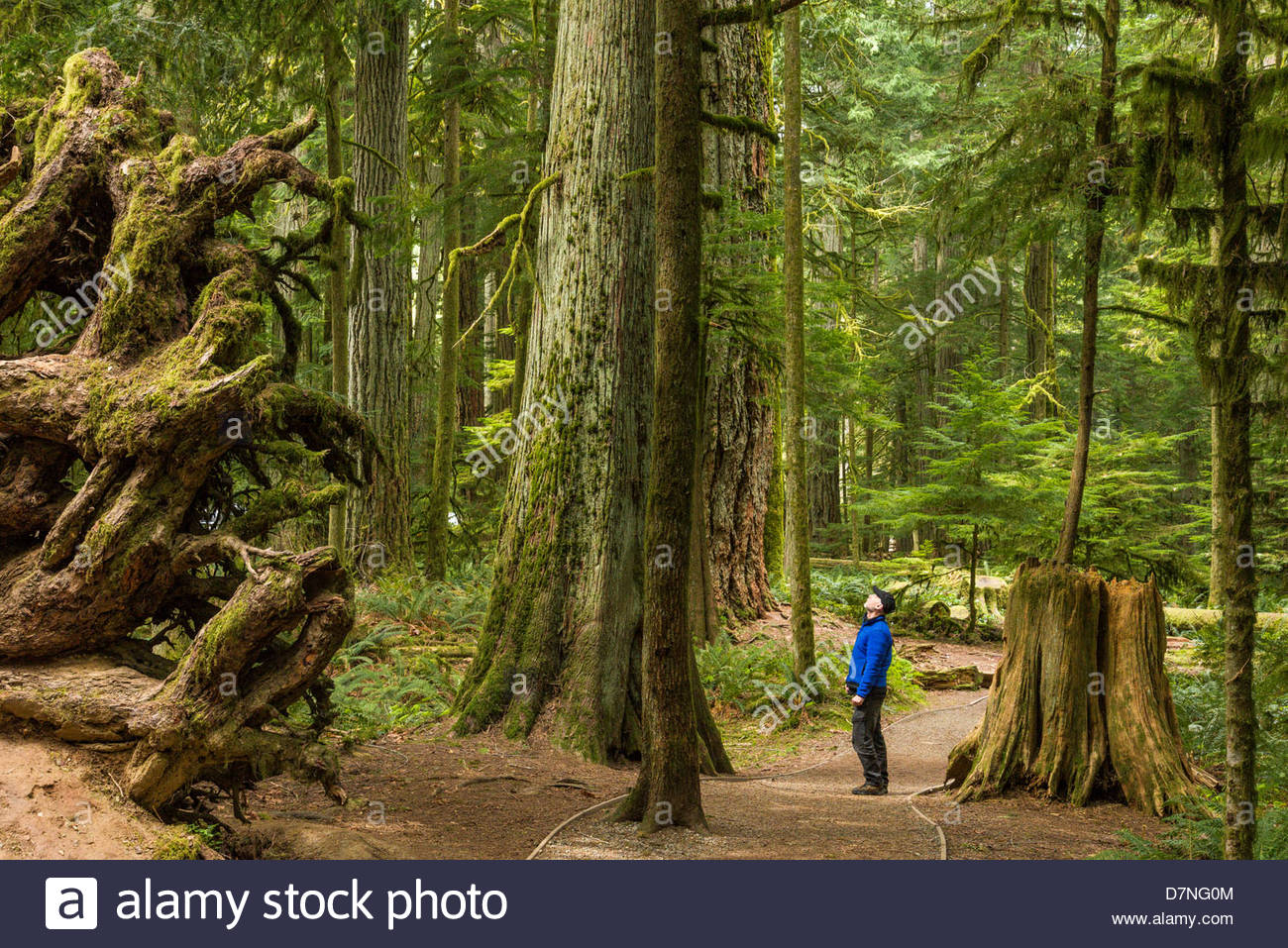 Cathedral Grove Vancouver Island Canada