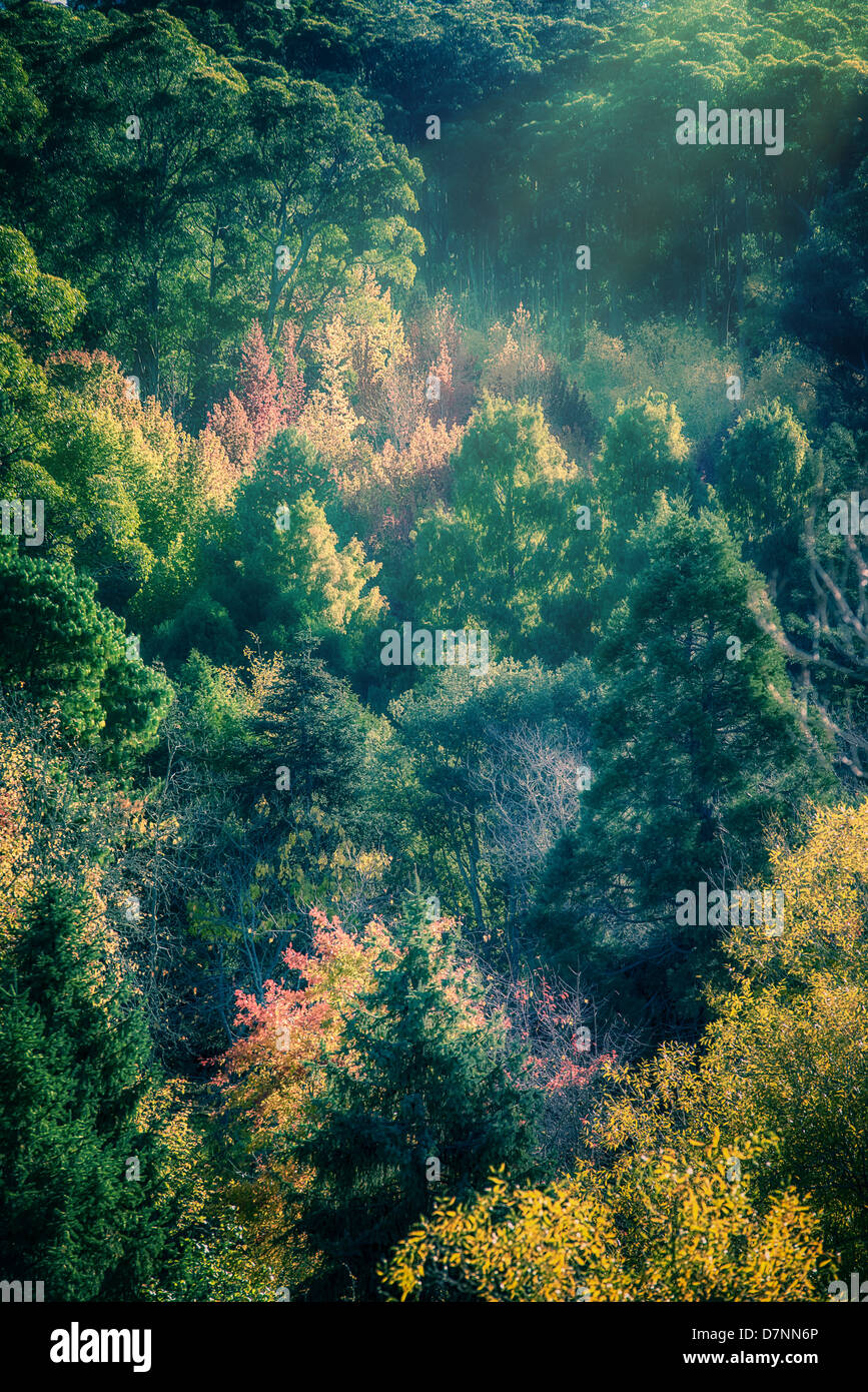 Autumn leaves at Mt Lofty as European trees start changing colour ...