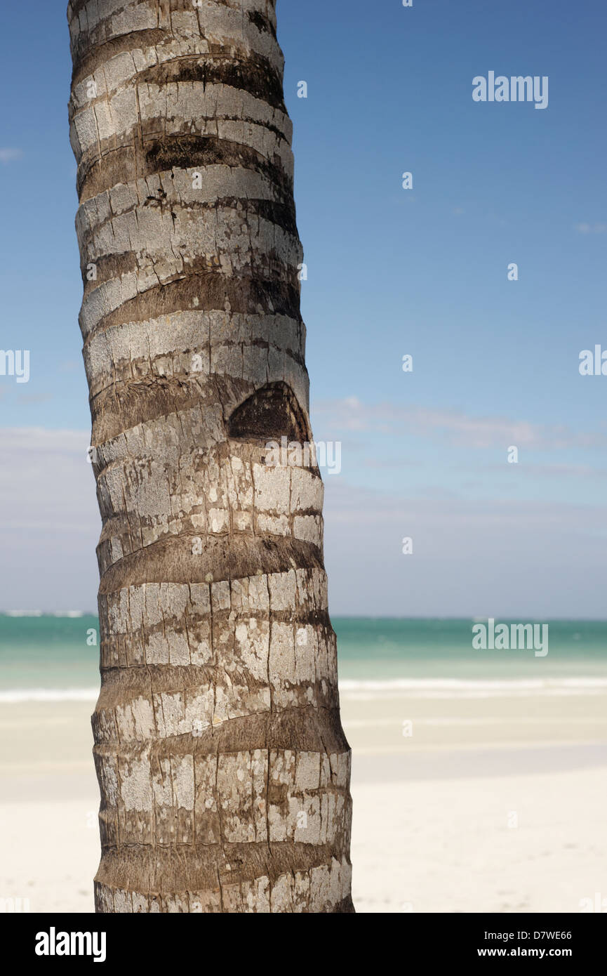 Palm Tree Trunk Against Blue Sky And White Sands Of Diani