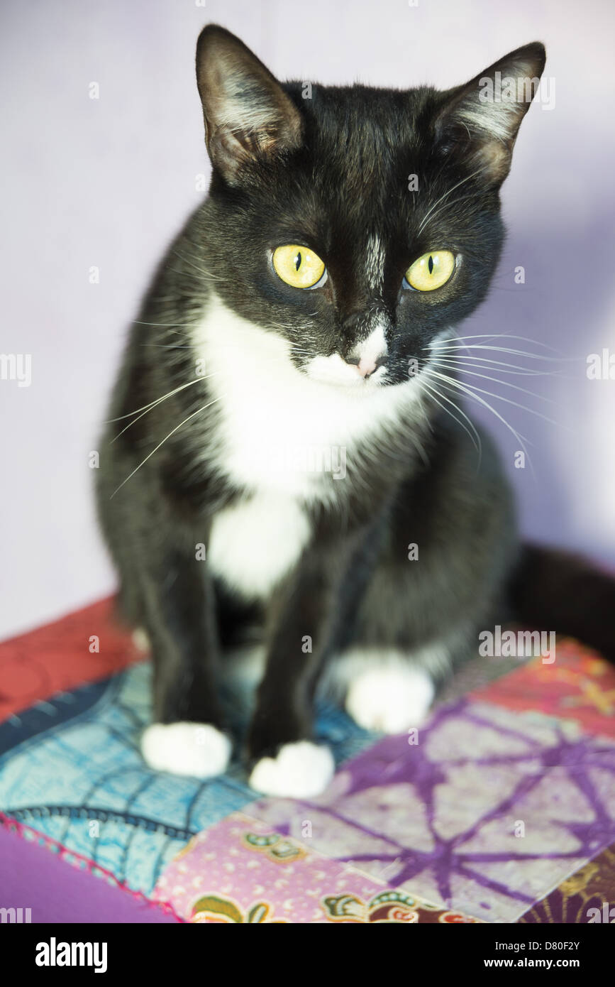Fabulous Chat Noir Stock Photos & Chat Noir Stock Images - Alamy JY65