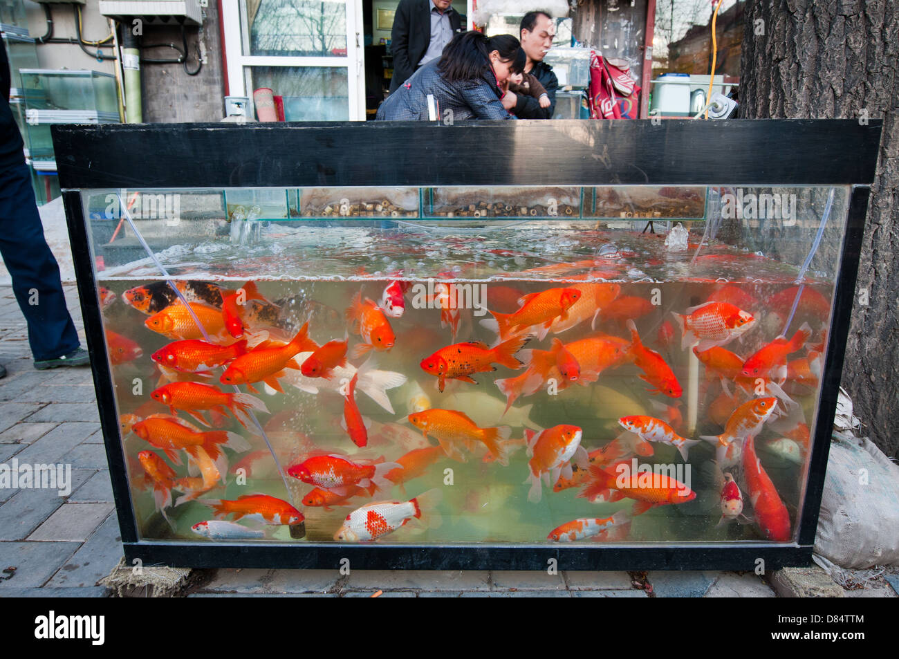 Fish for aquarium in kolkata - Fish Tank With Red Fishes On Sidewalk In Front Of Pet Store Beijing China