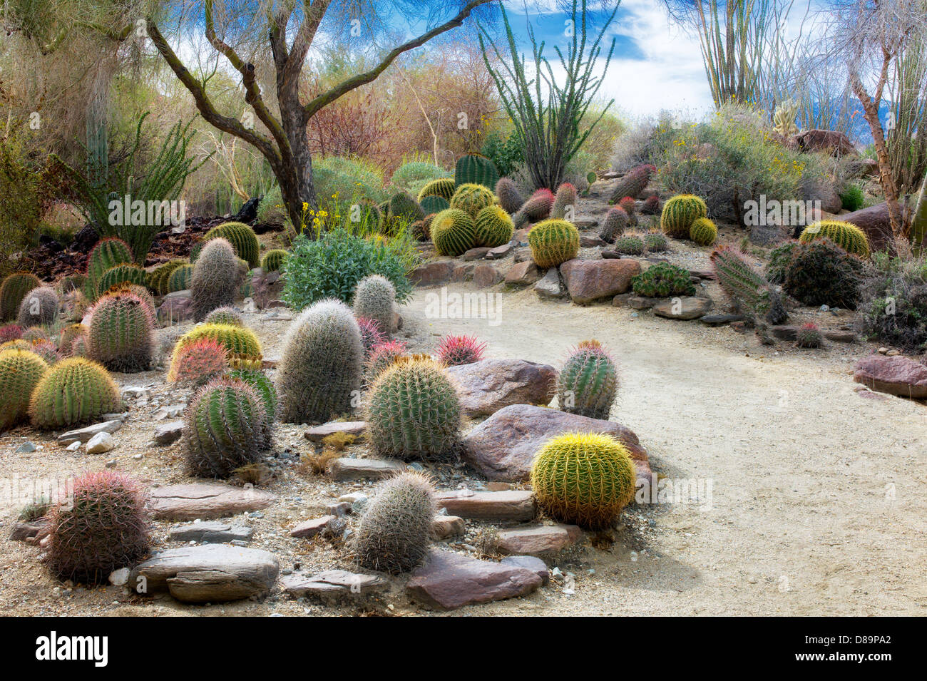 cactus garden stock photos  cactus garden stock images  alamy, Beautiful flower