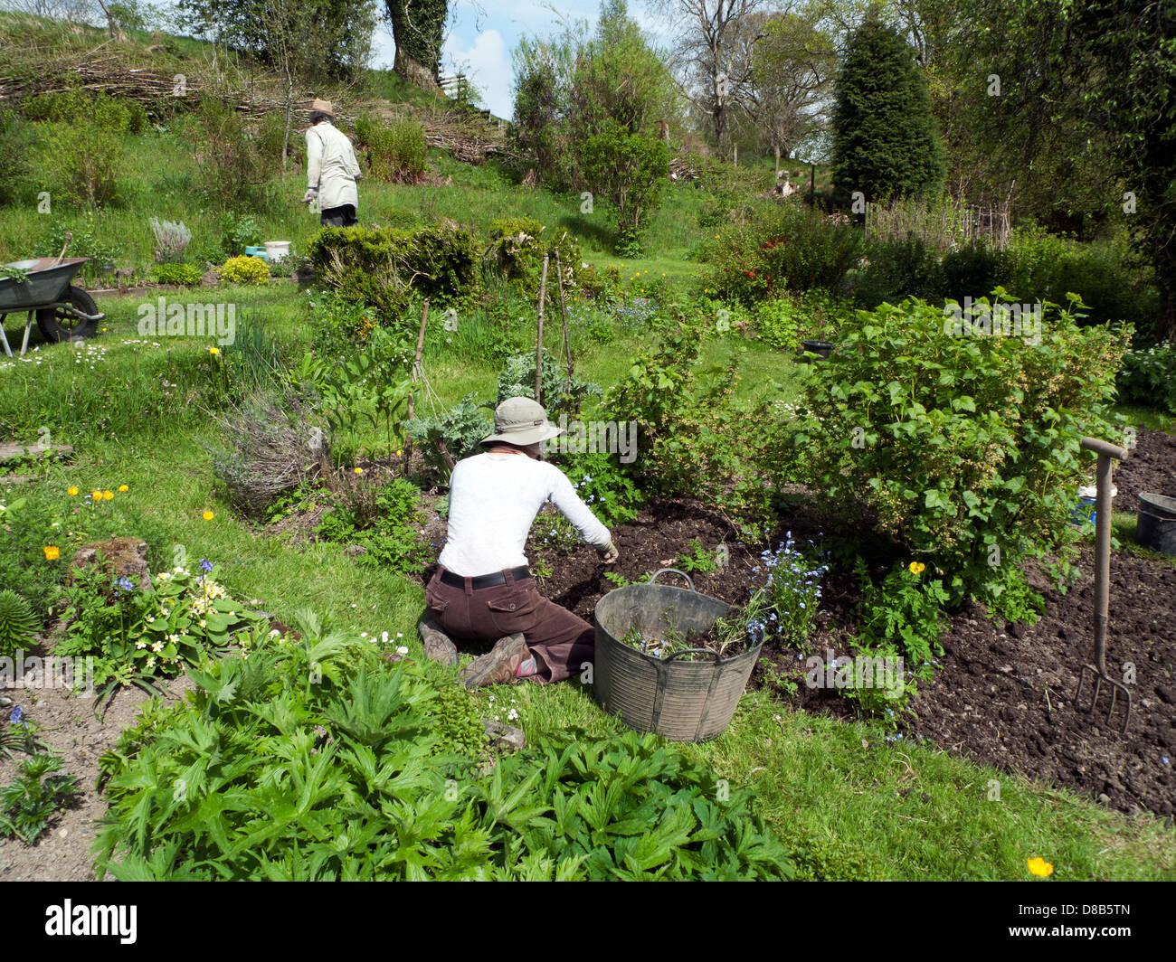 people gardening in the vegetable garden in may in spring sunshine in carmarthenshire wales uk kathy dewitt