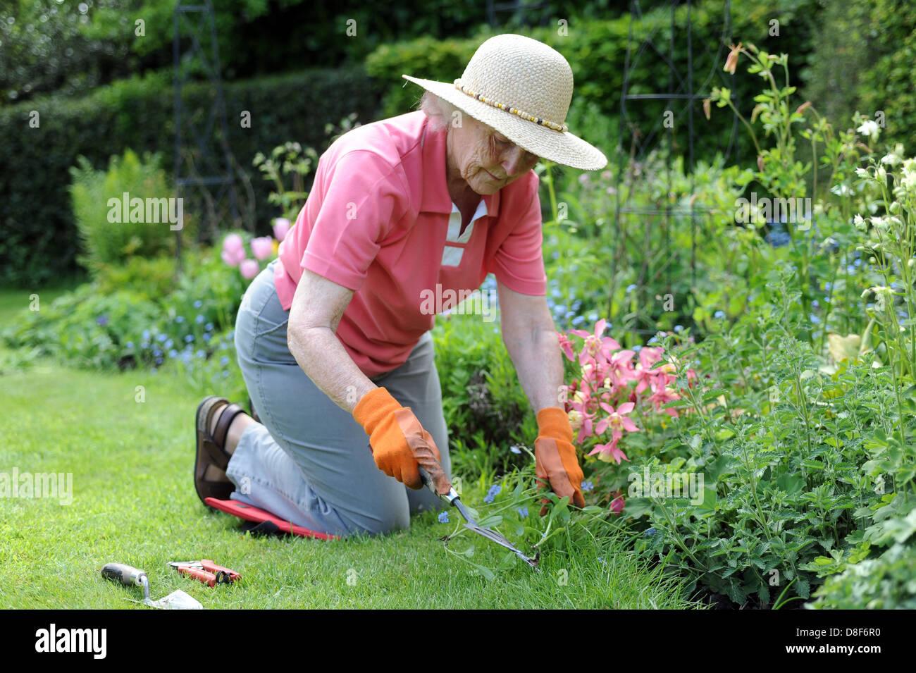 Elderly Lady Gardening In Her Family Garden At Home In