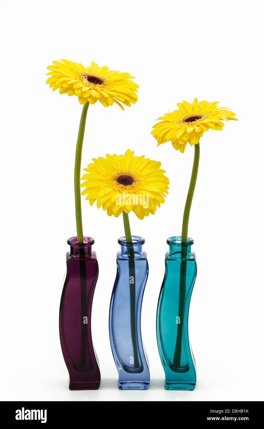 Three yellow gerberas in colorful glass vases stock photo royalty three yellow gerberas in colorful glass vases reviewsmspy
