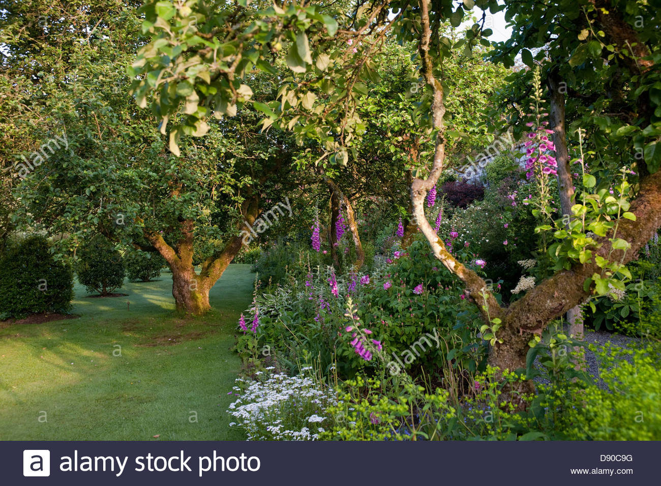 Orchard with old apple trees and flowering perennial for Garden trees england