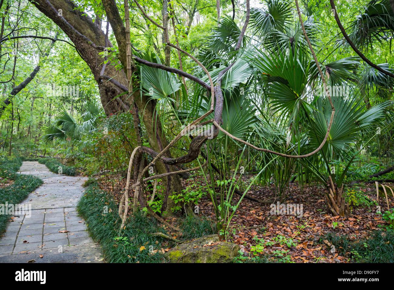 Kanapaha Botanical Gardens Home Face