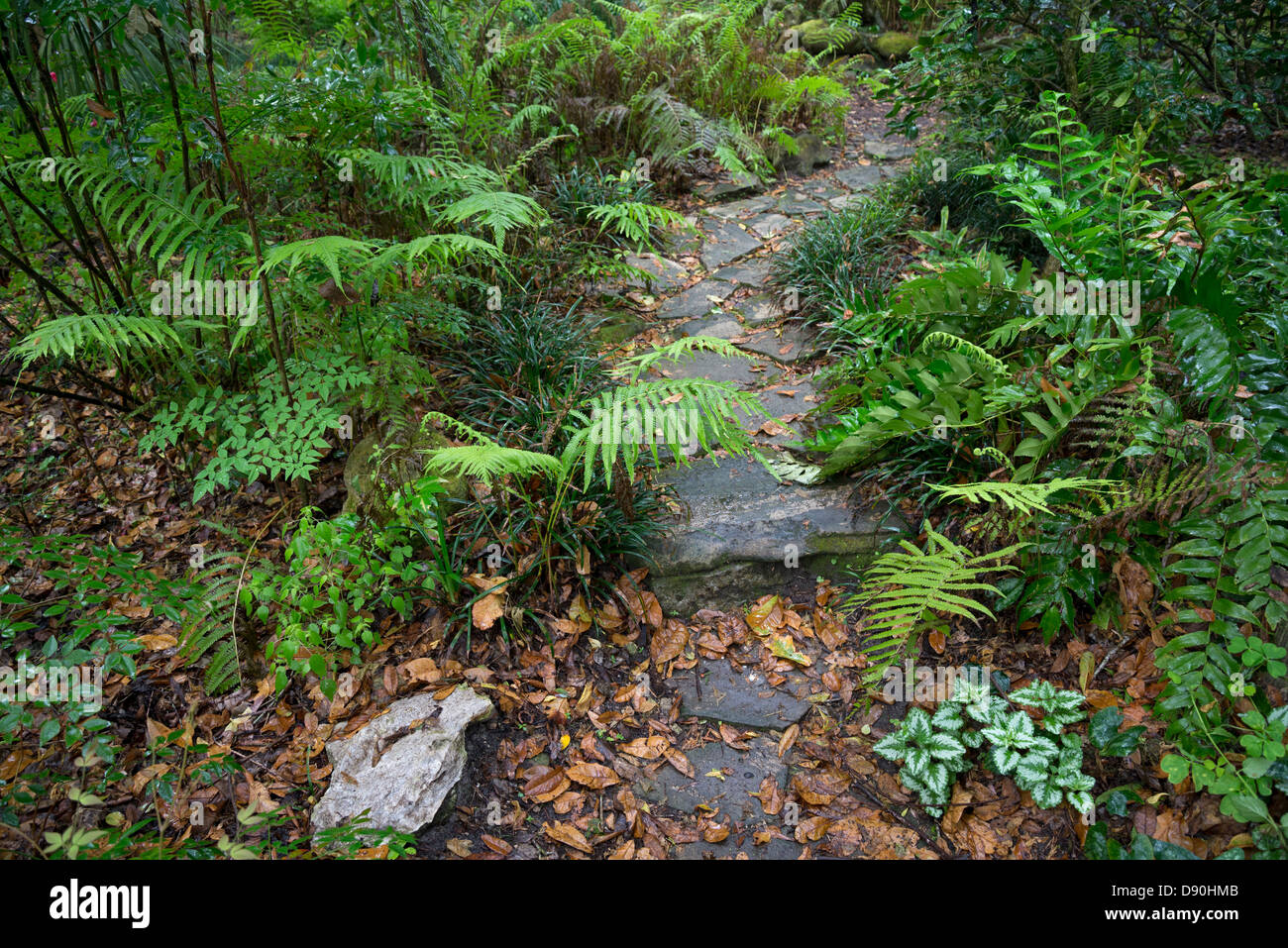 Beautiful natural gardens - Beautiful Springtime Natural Garden Setting With Ferns Rocks And Fallen Leaves