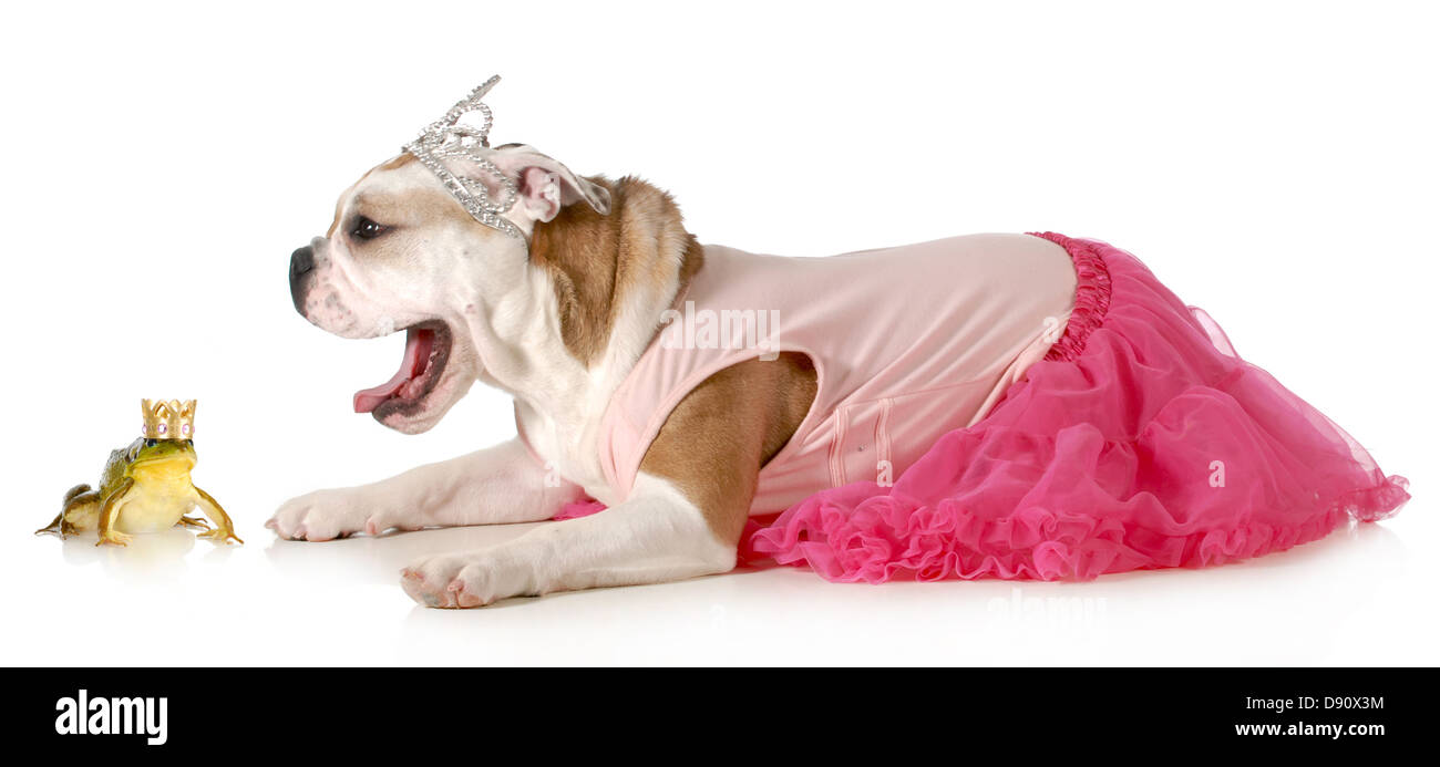 Princess lillifee coloring pages - Princess And A Frog English Bulldog Dressed Up Like A Princess Ready To Kiss Her