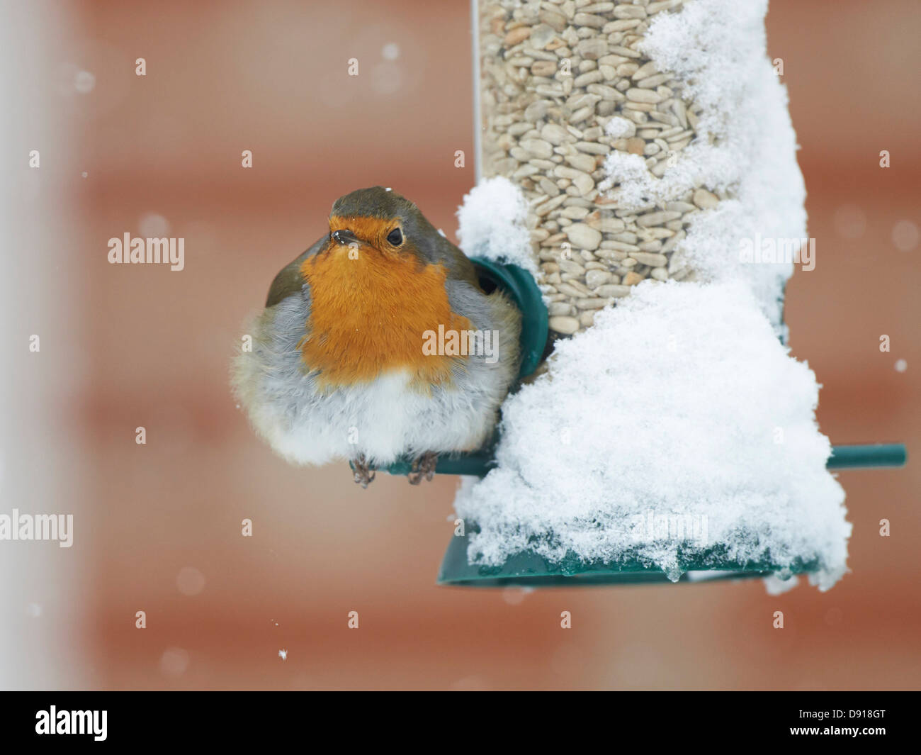 how to make a robin feeder