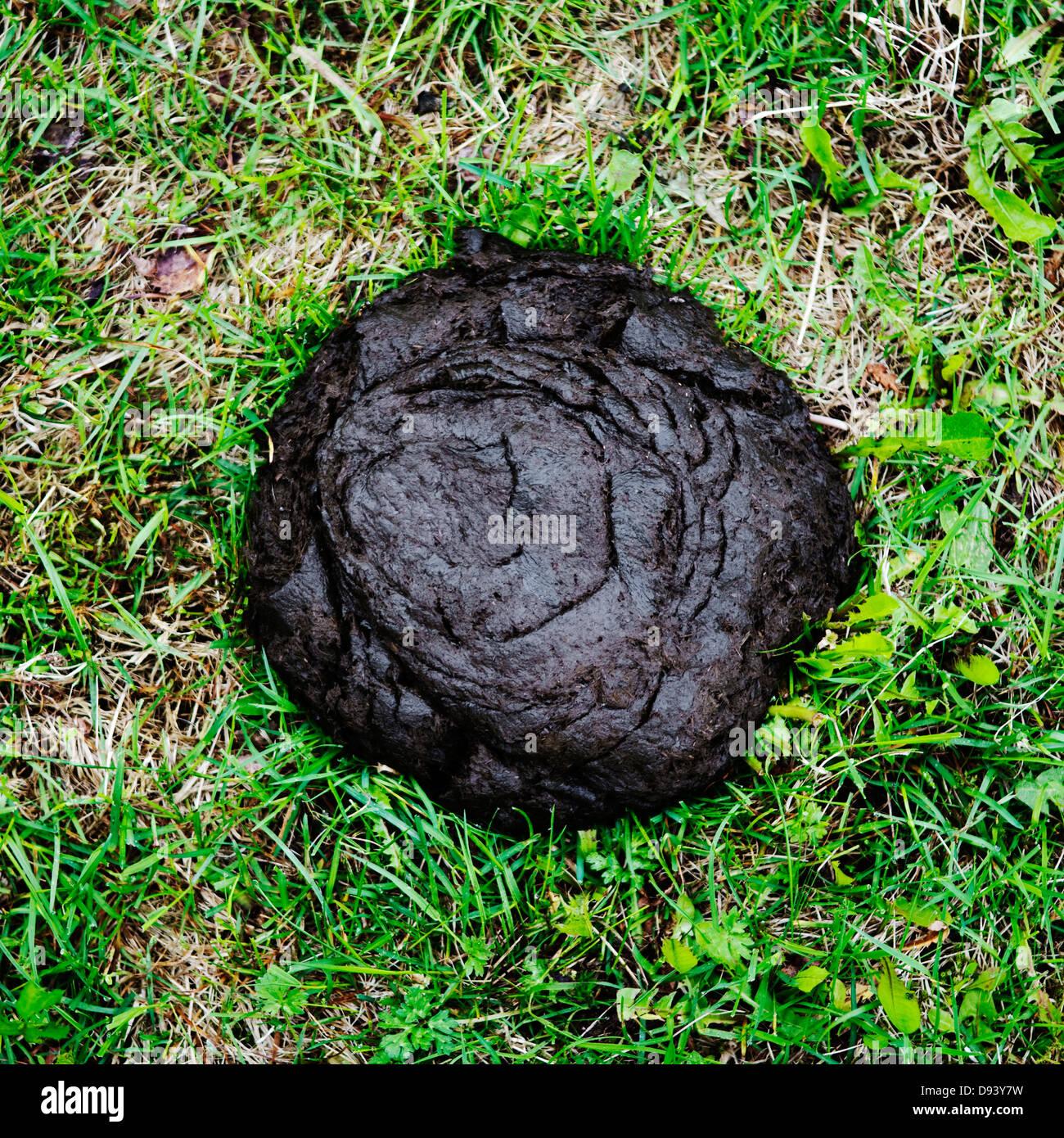 Cow Poop The Image Kid Has It