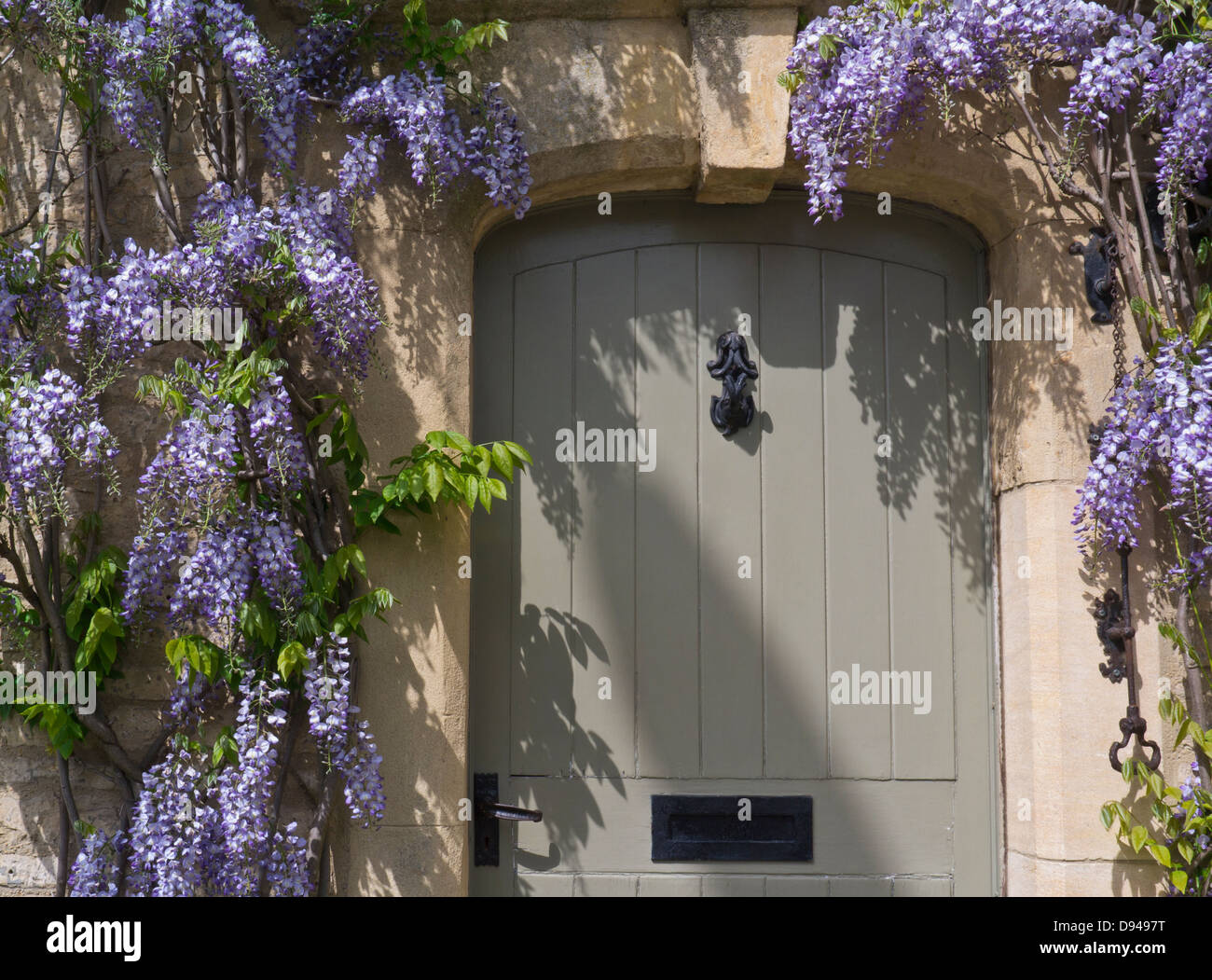 Front door of an old english cottage - Wisteria Surrounding A Smart Cotswold Cottage Front Door With Typical Oolitic Honey Coloured Cotswolds Quarried