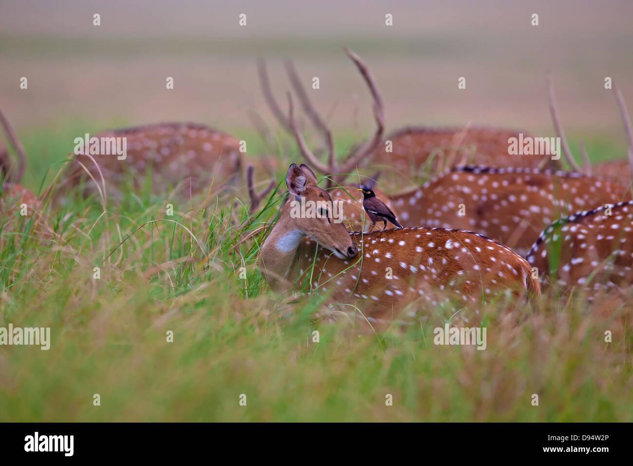 Free photo: Deer, Mule, Animal, Mammal, Nature - Free Image on ...