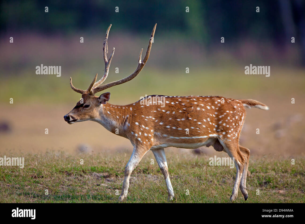 Free photo Animal Young Deer Mammal Fawn Nature White-tailed - Max ...