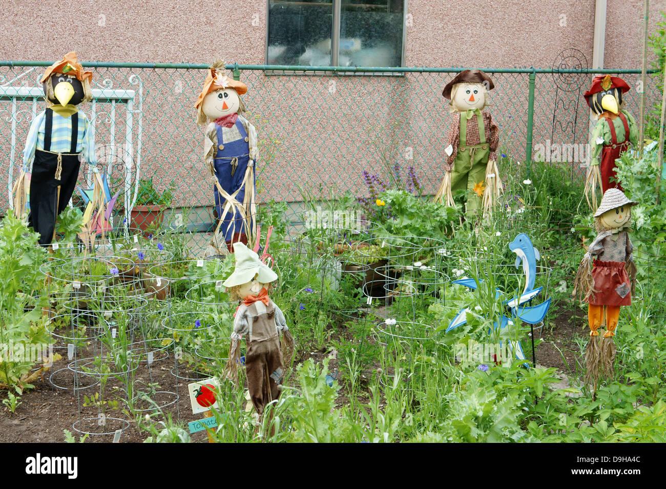 scarecrows in a backyard vegetable garden vancouver bc canada
