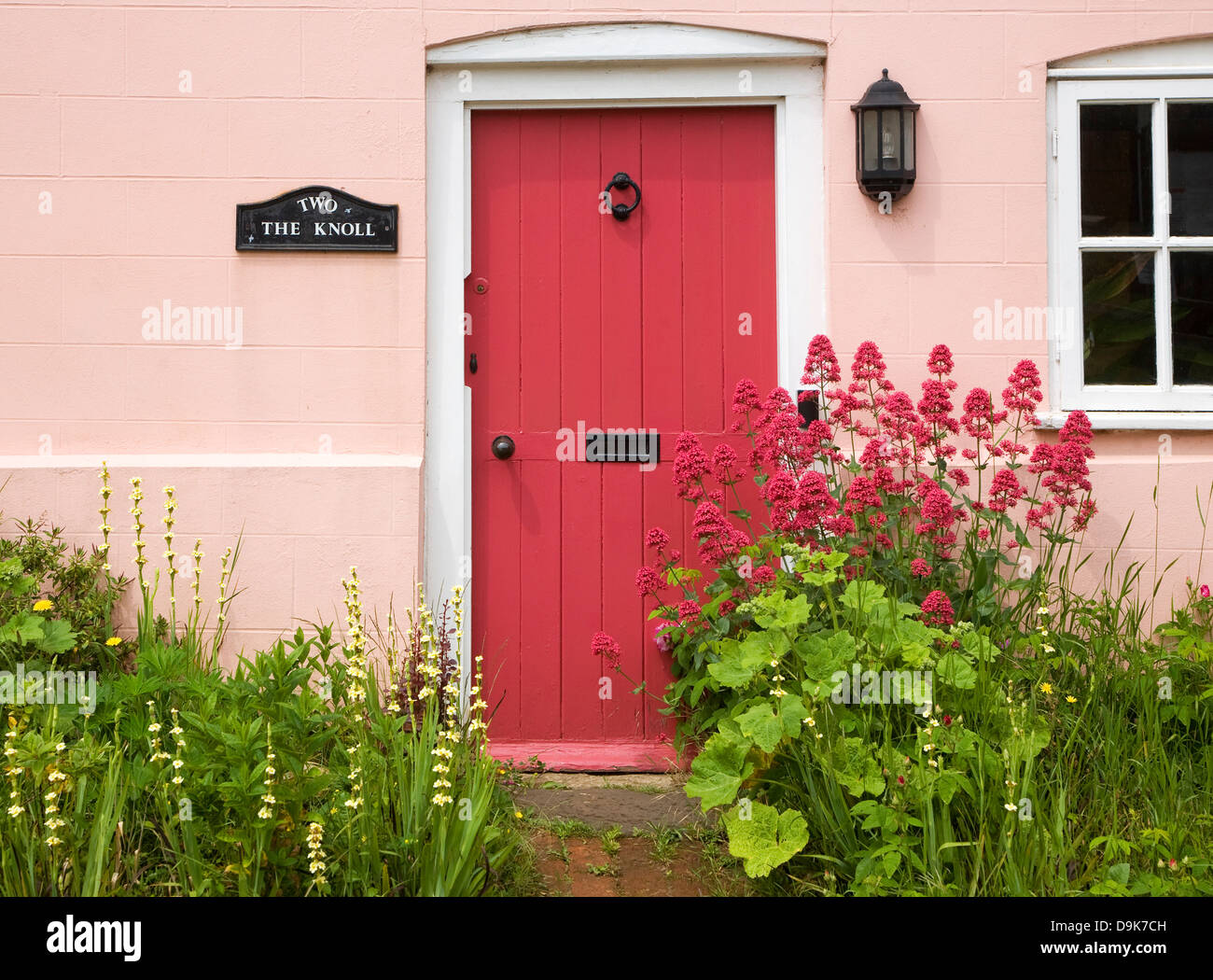 Front door of an old english cottage - Red Valerian Flowering Plant Centranthus Ruber Cottage Garden Front Door Suffolk England