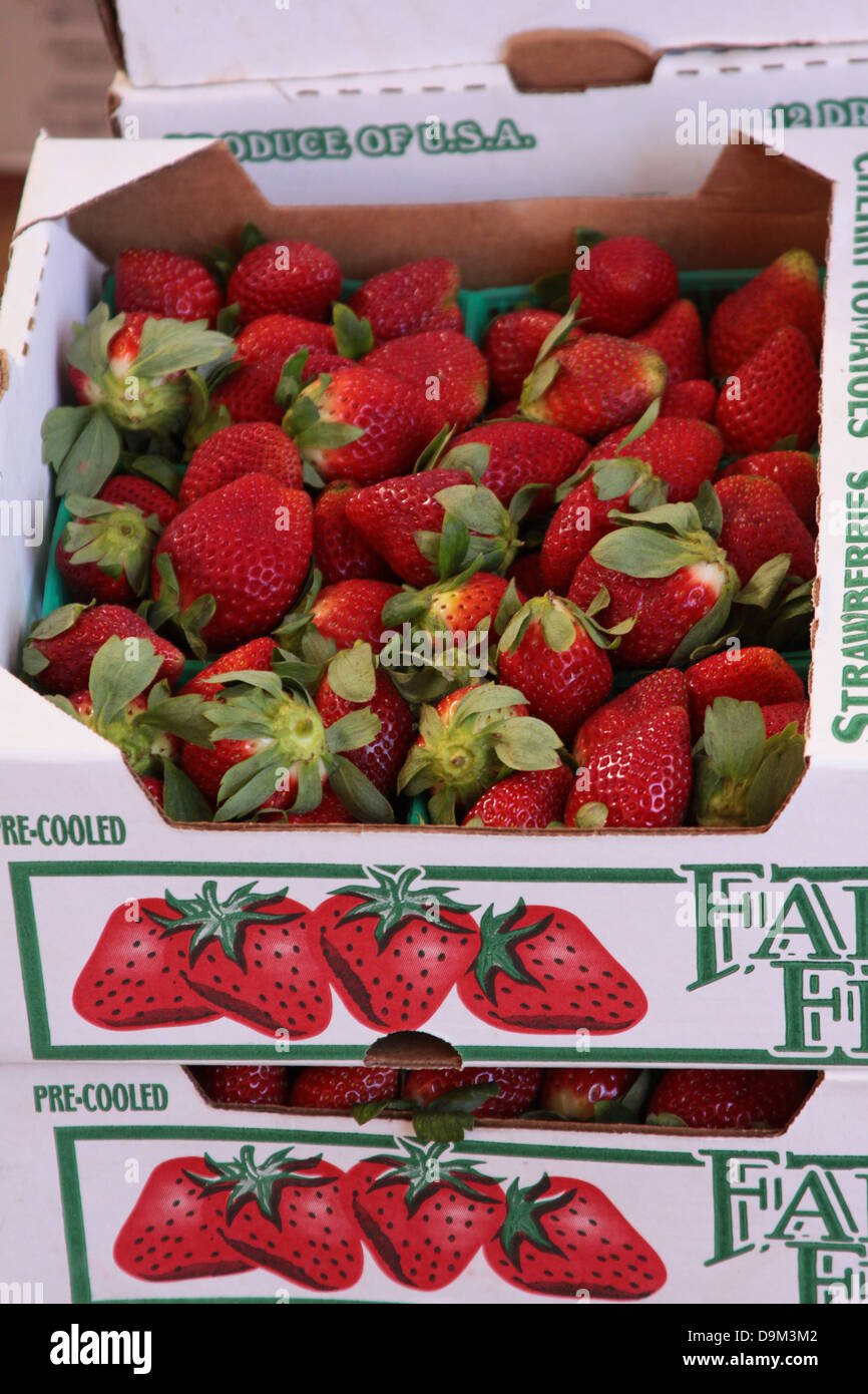 Box Of Strawberries On Sale At A Farmers Market In Winter Garden Stock Photo Royalty Free Image