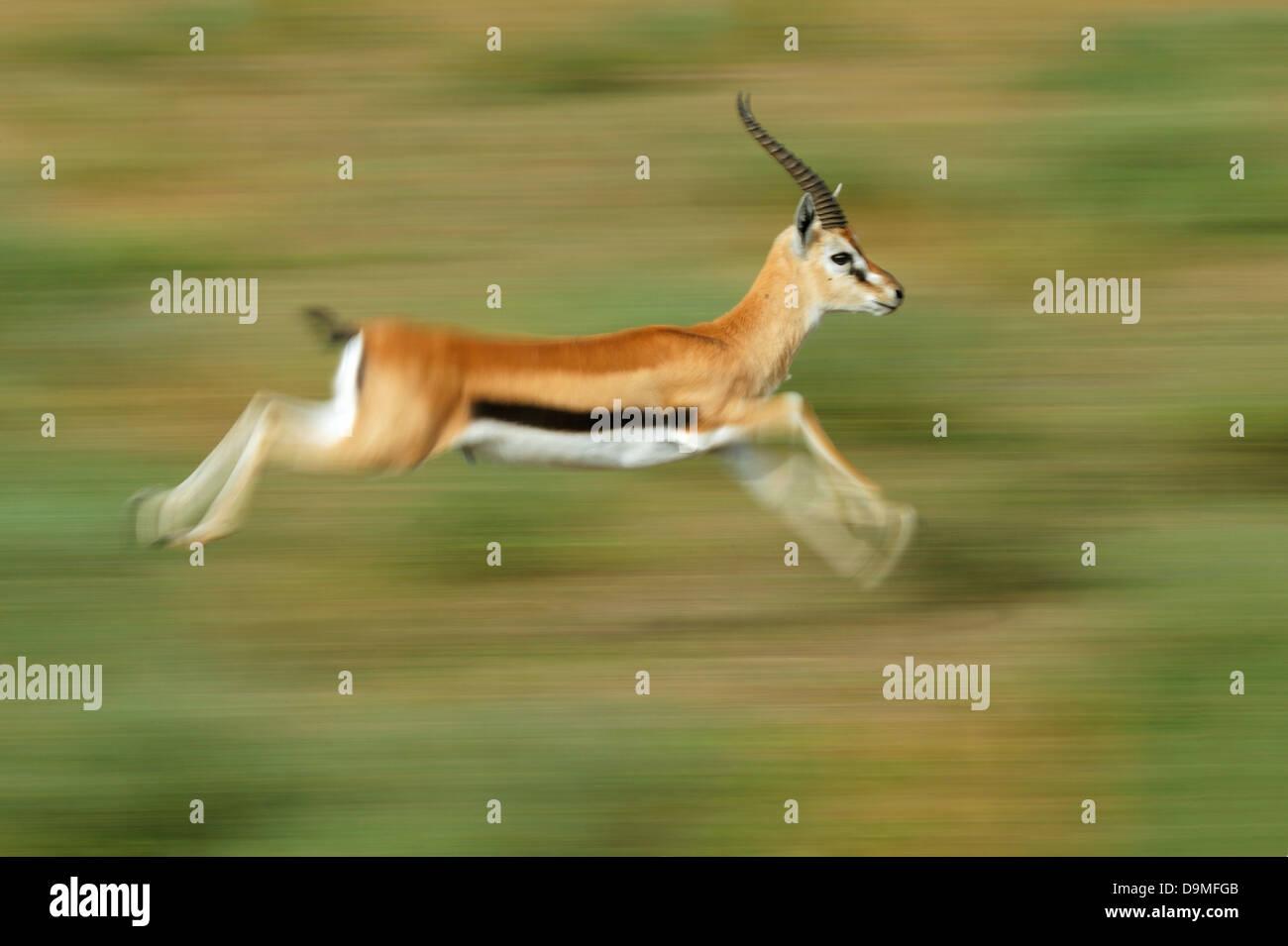 gazelle running machine - photo #31