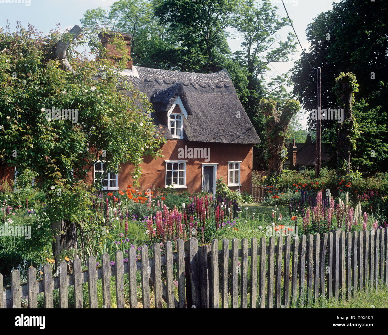 Stock Photo   Wooden Picket Fence Around Garden With Pink Lupins In Front  Of Thatched English Country Cottage
