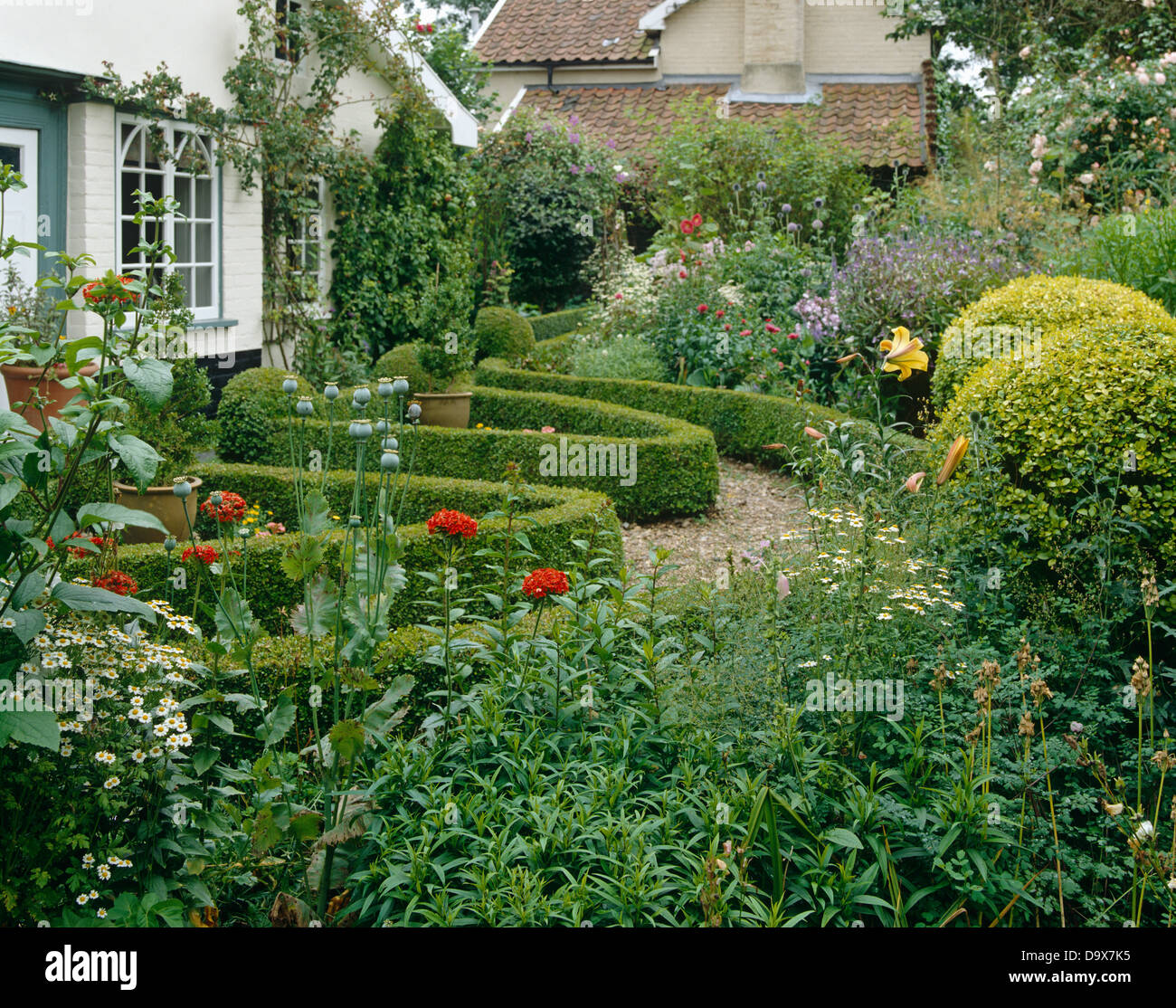 English Cottage Garden With Gravel Path And Low Clipped Box Hedging Round Gold Privet Shrubs