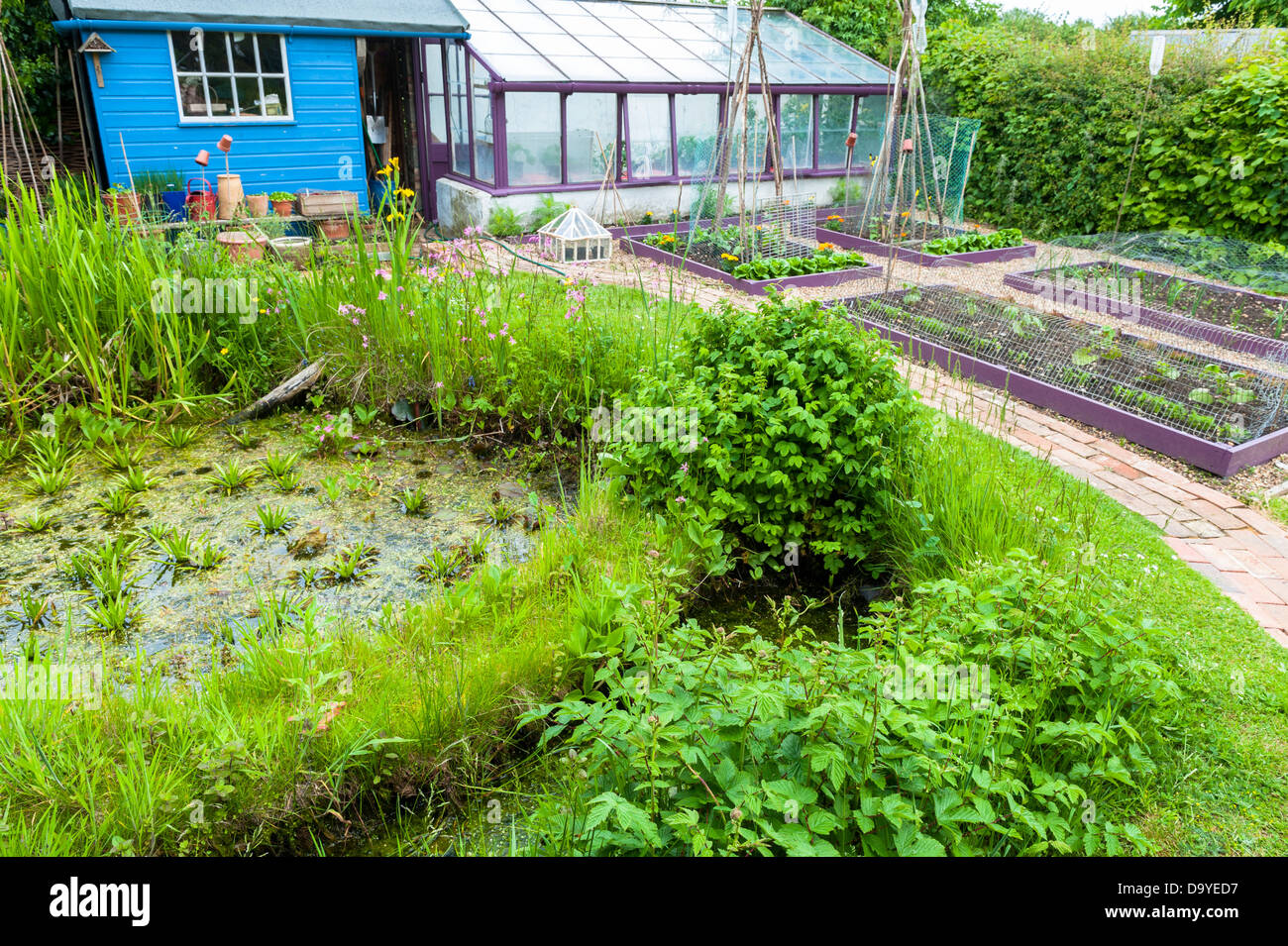 Small Garden In Early Summer With Wildlife Pond Raised
