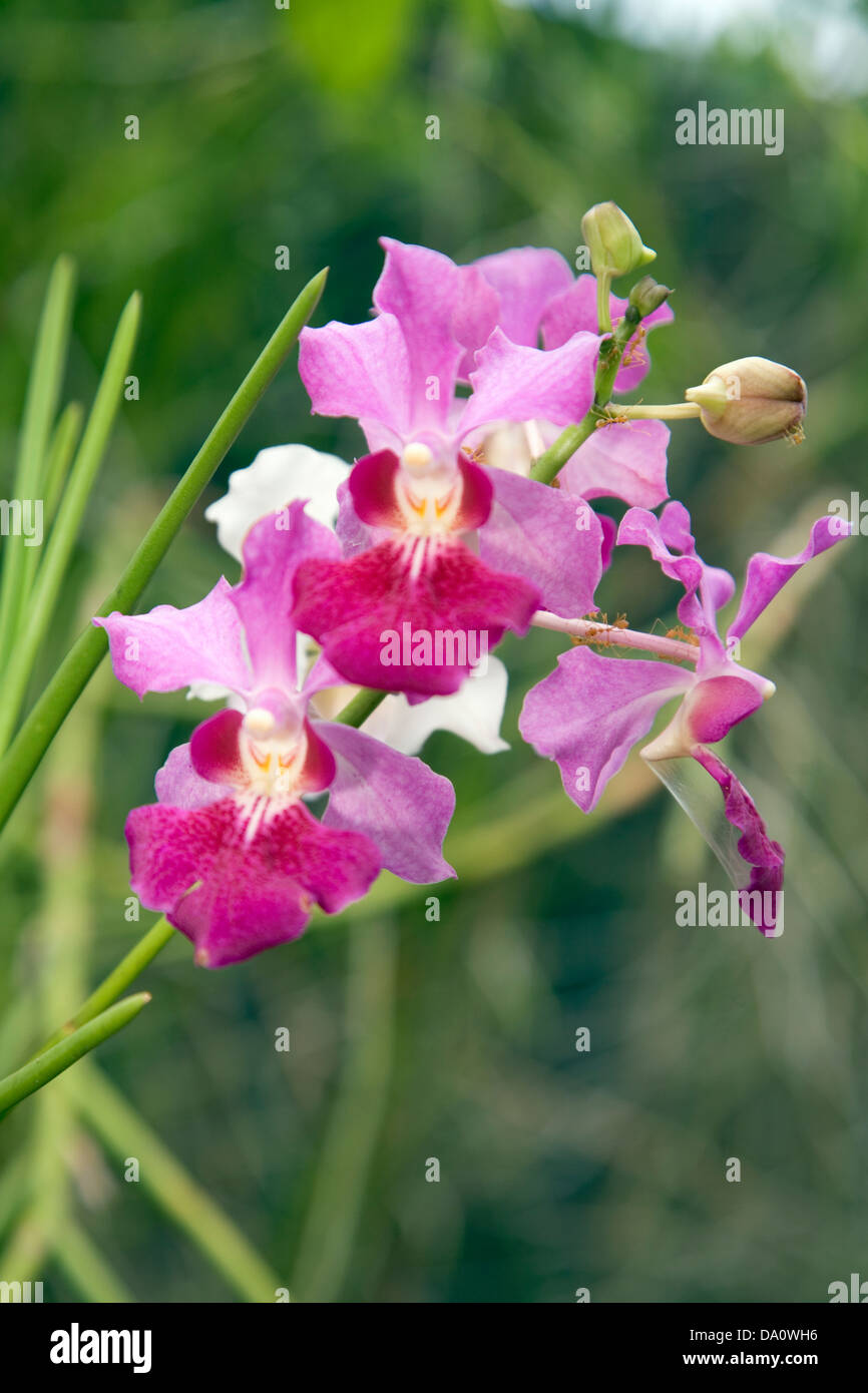 A Variety Of Exotic And Native Plants Greet Visitors To The National Stock Photo Royalty Free