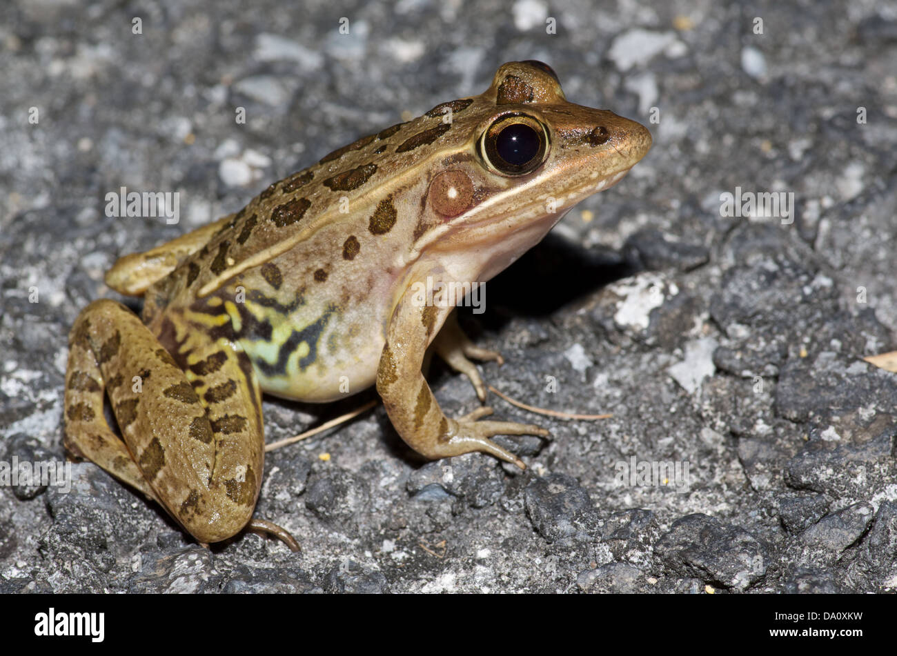 Frogs to Leap Into Mass Extinction | Financial Tribune