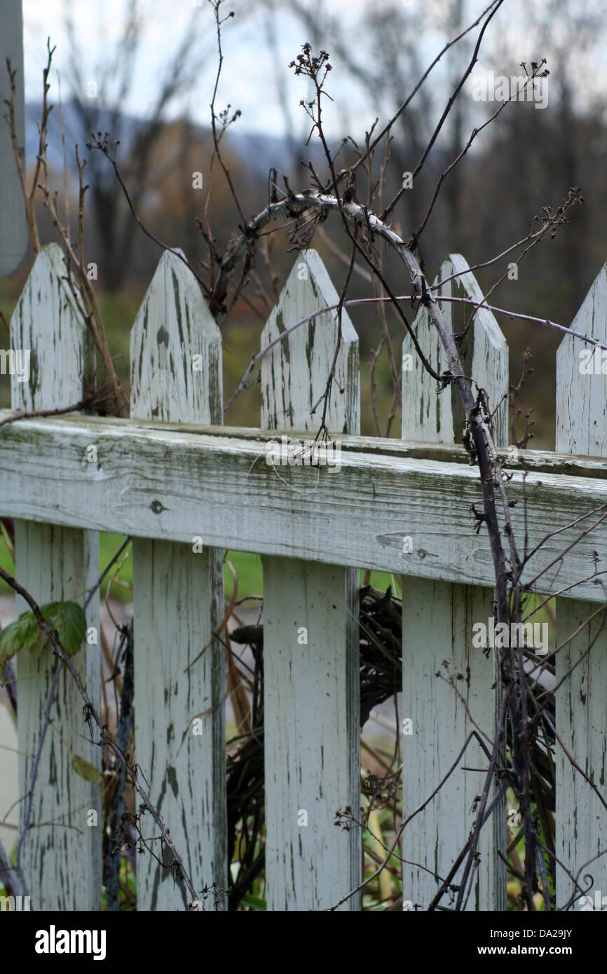 Old garden house - Stock Photo White Fence Old Weathered Vine Garden House Farm Weed Weeds Leaves Leaf Vertical
