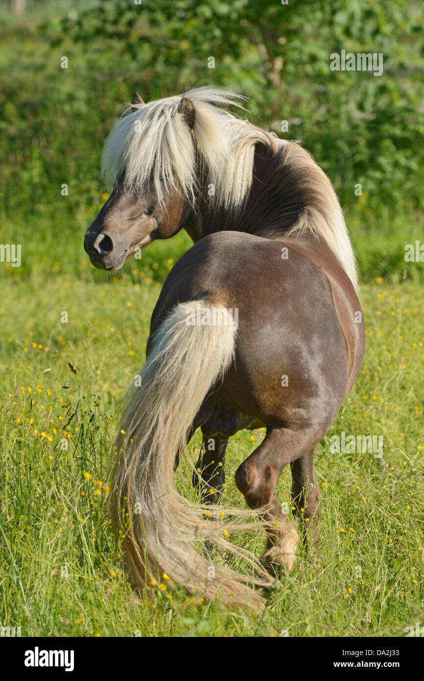 long manes stock photos - photo #7