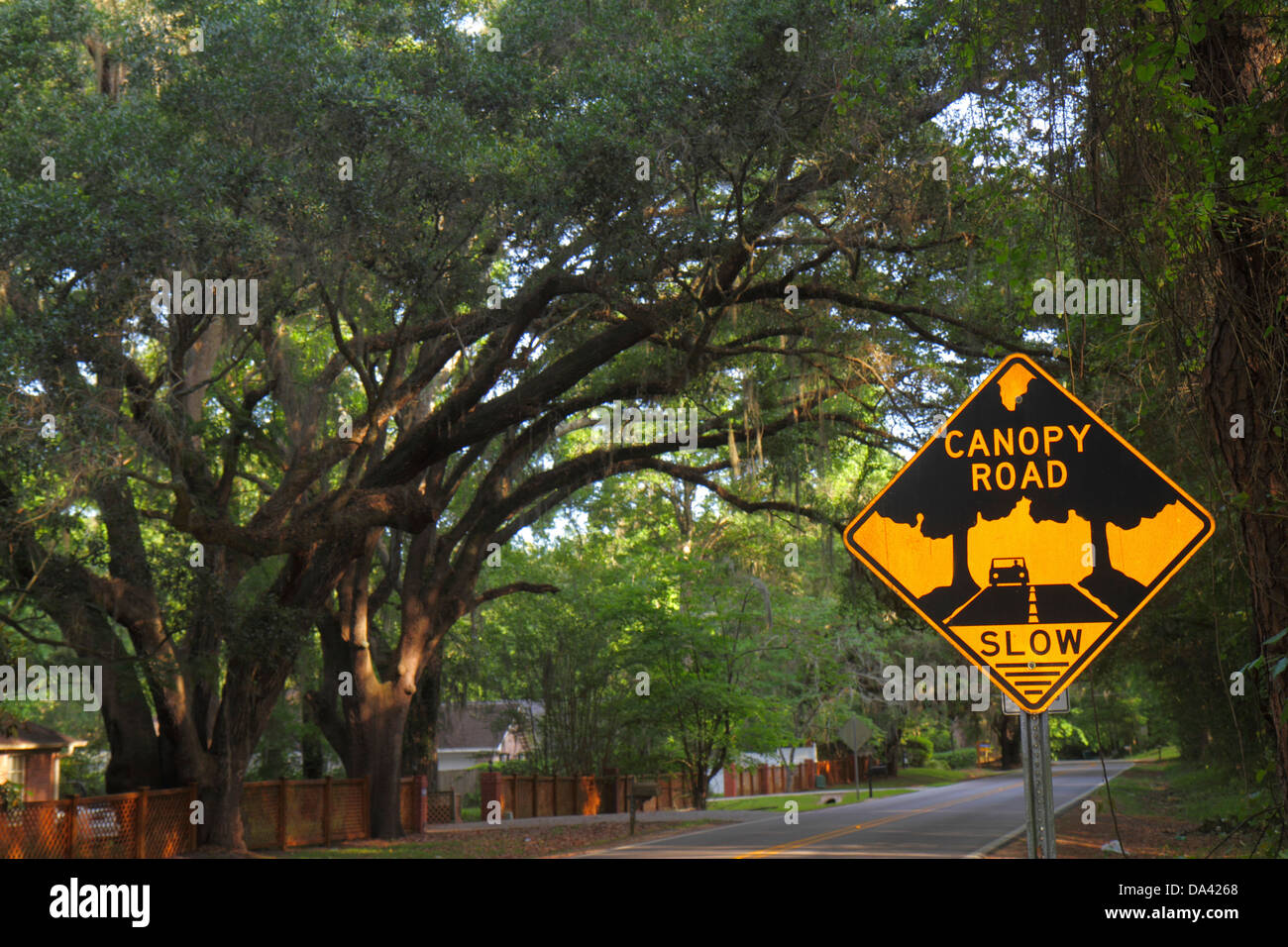 Tallahassee Florida Canopy Road live oak trees Spanish moss sign : canopy spanish - memphite.com