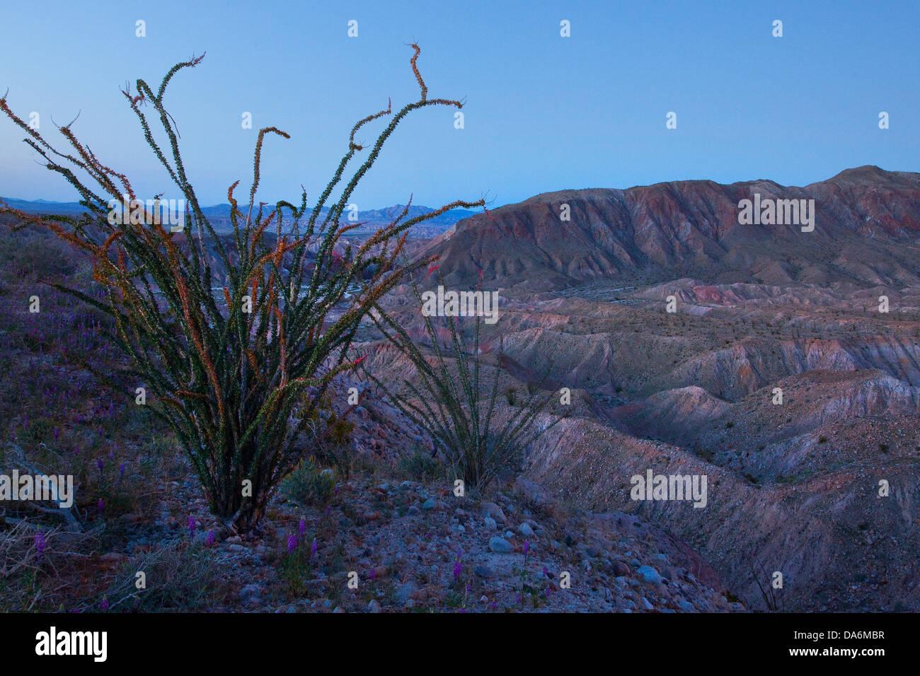 Usa united states america california borrego springs borrego usa united states america california borrego springs borrego anza borrego desert state park wildflowers spring flower mightylinksfo Images