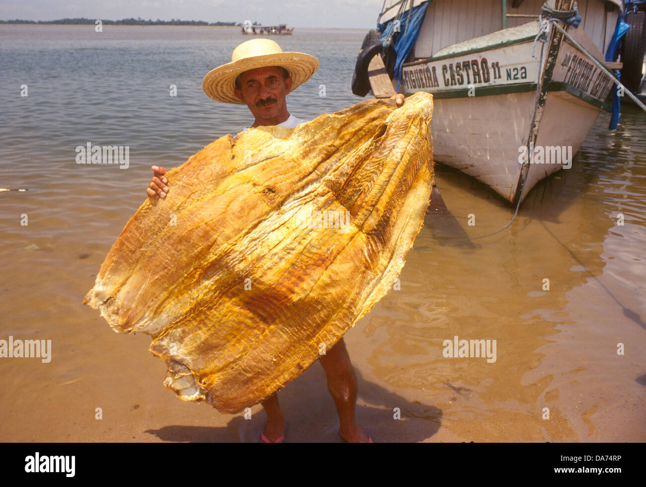 Fishing Of Pirarucú The World Largest River Fish Cultural Stock - World largest river in the world