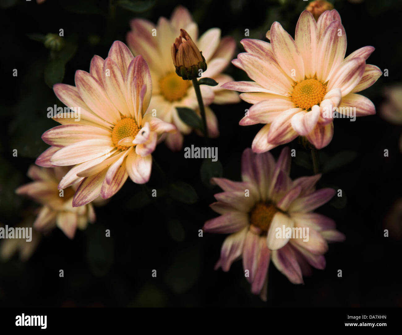 Beutiful beutiful stock photos & beutiful stock images - alamy