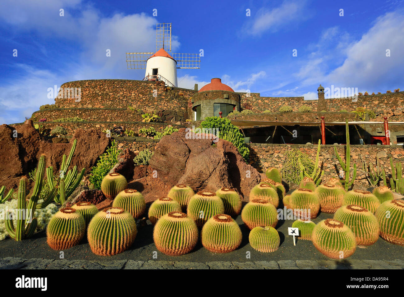 Spain, Europe, Canary Islands, Guatiza, Lanzarote, cactus ...